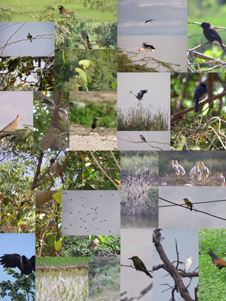 2010 Birds of raichur