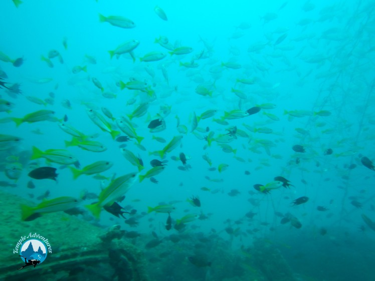 fishes-in-temple-reef-pondicherry00003