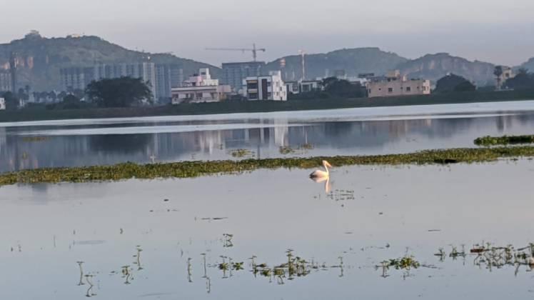 Nanmangalam lake