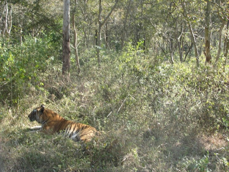 tiger safari shimoga-3